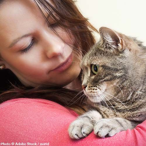 The PAWS Act recognizes that domestic violence impacts all members of the family - including the four-legged.