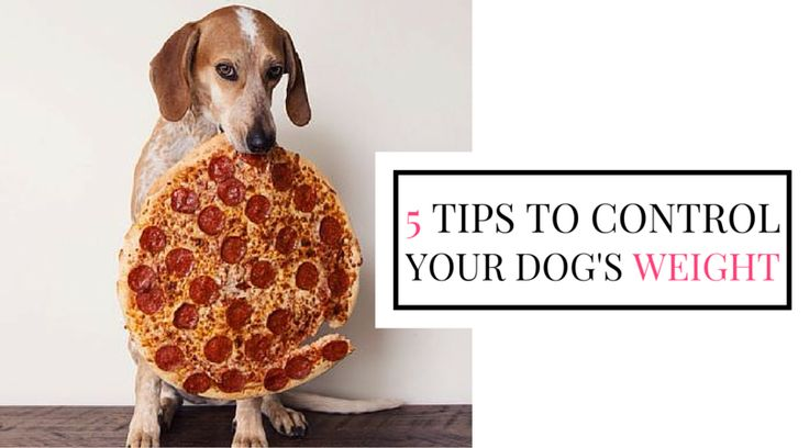 5 Tips for controlling your #pet's weight: http://www.entirelypets.com/pet-obesity-awareness-day.html?utm_source=twitter&utm_medium=web&utm_campaign=eptwarticle #dogs #cats