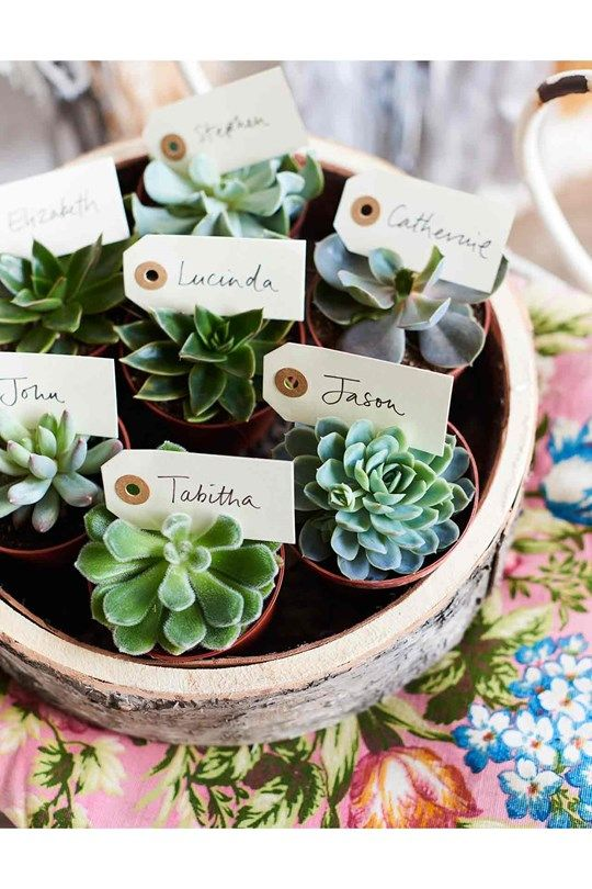 Succulent favours that double up as place name holders