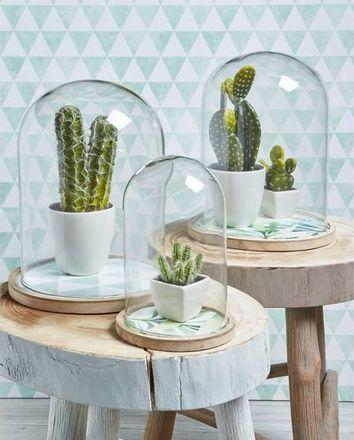 Prachtige cactus