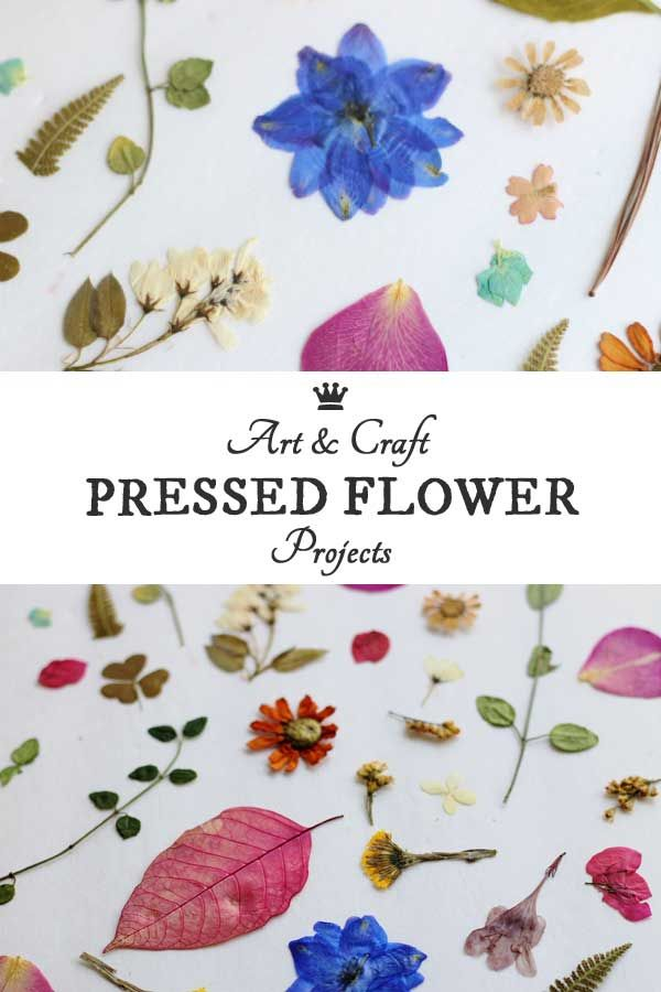 25 Pressed Flower Art Projects & Several Techniques for Pressing Them