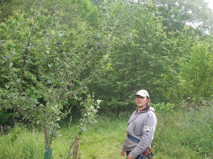 En el bosque comestible que iniciamos en 2009. Con manzanos, higueras nísperos, perales, cerezos, ciruelos, kiwis. Con el paso de los años se han intercalado avellanos, castaños, fresnos y robles