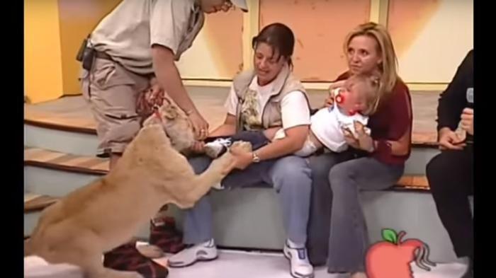 Video Hewan Buas - Anak Kecil Diterkam Singa Saat Siaran Live Televisi, Jadi…