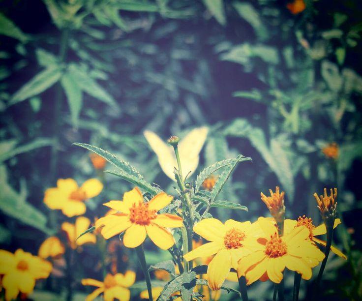 Butterfly 💛