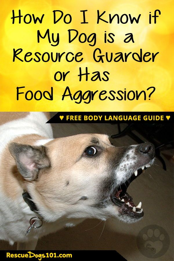 Living With A Resource Guarding Dog Dog Training Aggressive Dog