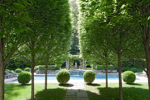 Gorgeous pool with an allee of trees and rounded boxwoods, Bedford NY