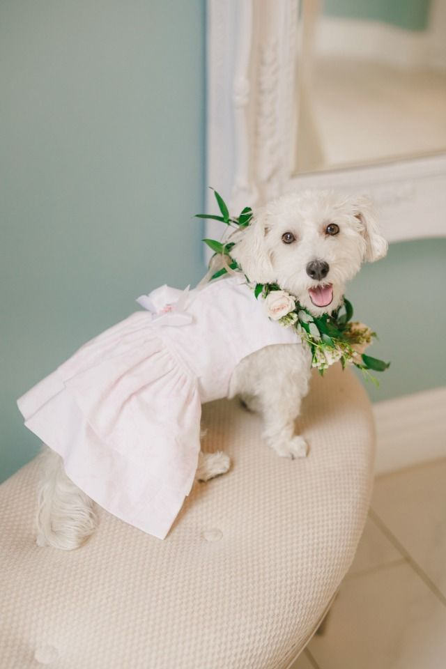 Doggie flower girl dresses and where to buy them!