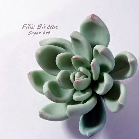 {Marvelous teal-colored Succulent from PETUNYALARIM}