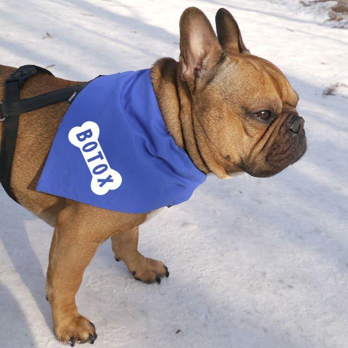 Personalizowana Bandana na obrożę dla psa Kocury, niebieska chusteczka dla pupila – Cena | sklep internetowy Psiakrew