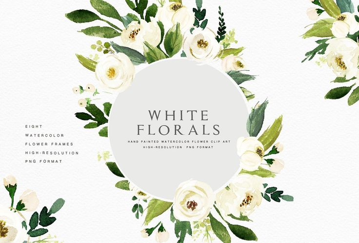Watercolor White Flower Clip Art