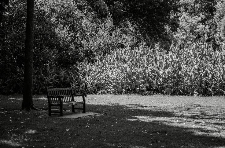 Adelaide Botanical Gardens, need I say more...