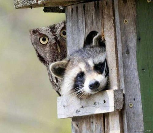 「別の動物がいっしょにいると、どうして幸せな気持ちになるんだろう?」意外な組み合わせの写真いろいろ
