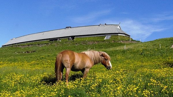 #norway view by #Webbon, for #HomeDecor #FineArtPhotography by #FineArtLandscapes #Zen #Nature #HealingArt #Canvas #HomeDecorNone #FineArtPrints #Norway #sky #Lofoten #horse #vikingmuseum
