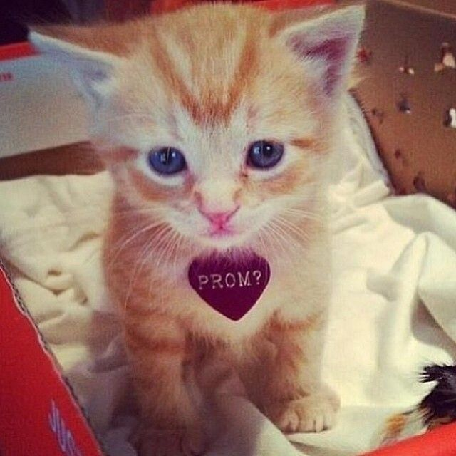 Statigram – Instagram webviewer: Girls, Cat, Wedding Propo, Puppys, Prom Propo, Prom Ideas, Kittens, Prom Homecoming, Kitty