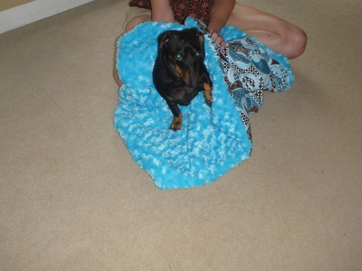 Brady in his new blanket.