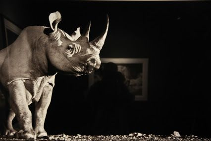 Beauty of an endangered animal : Rhino at night vision...  by, David Yarrow.: Fine Art Wild life Photographer.  He represented by some of the world leading galleries, with his prints selling for up to $60,000 and in America. One of his work was exhibited in his presence in Sharjah International Book Fair, 2016.