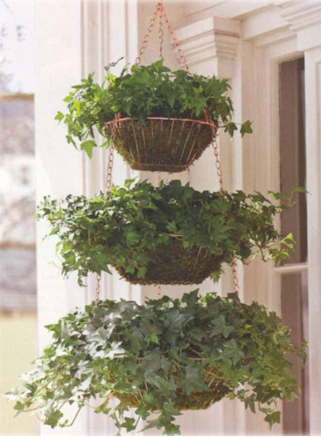 25 Melhores Ideias Sobre Plantas Penduradas No Pinterest