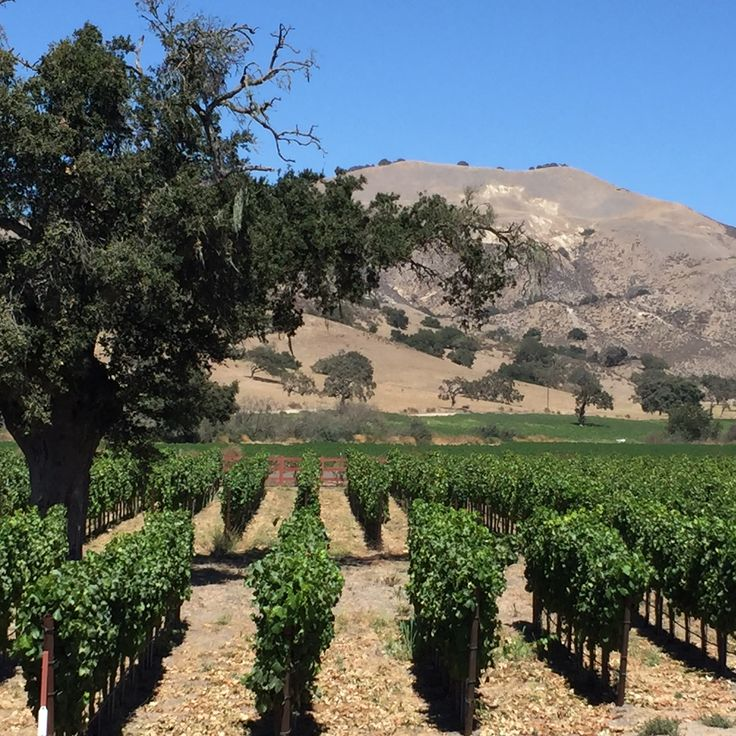 Before you visit Santa Barbara wine country, make sure you have a great wine tasting plan in place. Our 10 Best Santa Barbara Wineries will get you started!