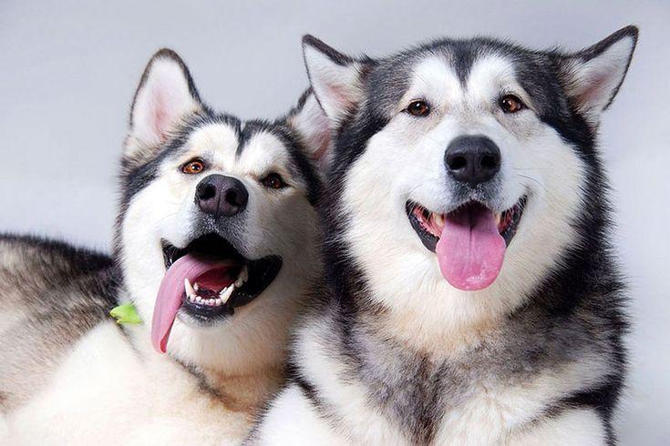 подмигивающая собака: 12 тыс изображений найдено в Яндекс.Картинках