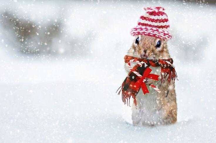 5 Ideen für Last-Minute Geschenke zu Weihnachten - Geschenkepanik zu Weihnachten - http://wilderminds.de