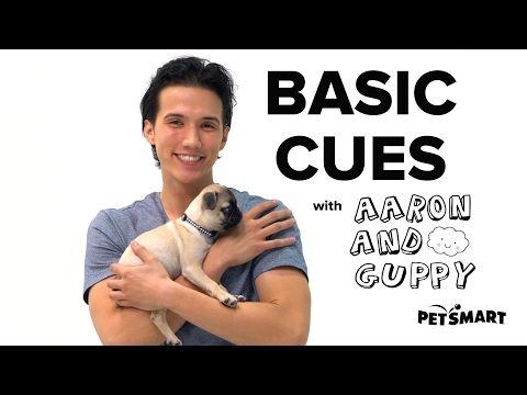 PetSmart Puppy Training: Basic Cues - YouTube