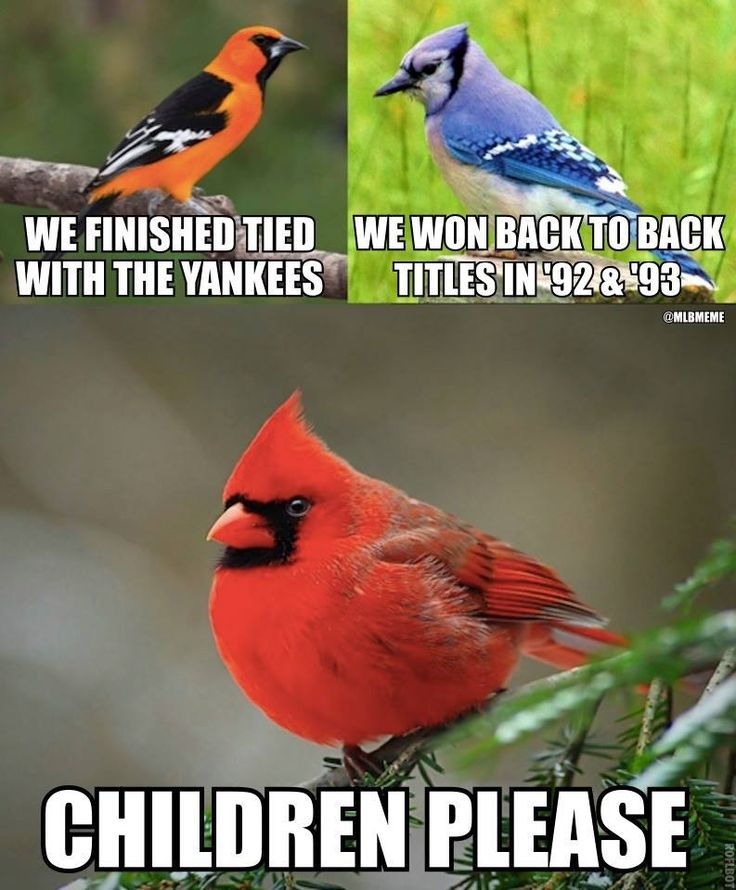 St Louis Cardinals meme
