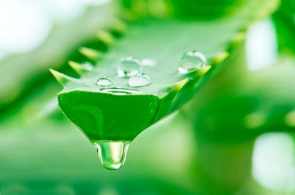 10 Aloe Vera Uses You Probably Didn't Know About