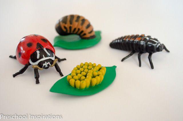 29 Best images about Ladybugs on Pinterest   Raising ...