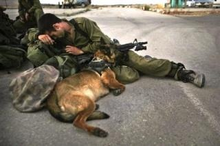 soldier with his dog soldier