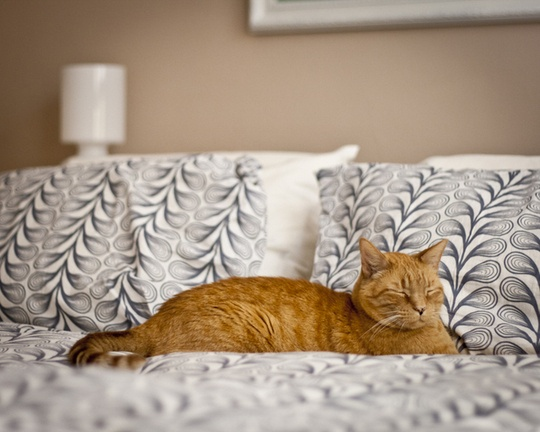 Pets in the Bedroom from Our House ToursHouse Tours, Modern Pets, Favorite Bedrooms, Pets Accessories, Bedrooms Accessories, Cat Friends, Pets House, Gingers Cat, Adorable Pets