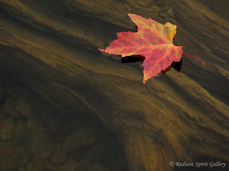 """Driftwood and Maple Leaf""    A maple leaf floats with tranquility above driftwood on Saganagons Lake in the Quetico Provincial Park, Canada."