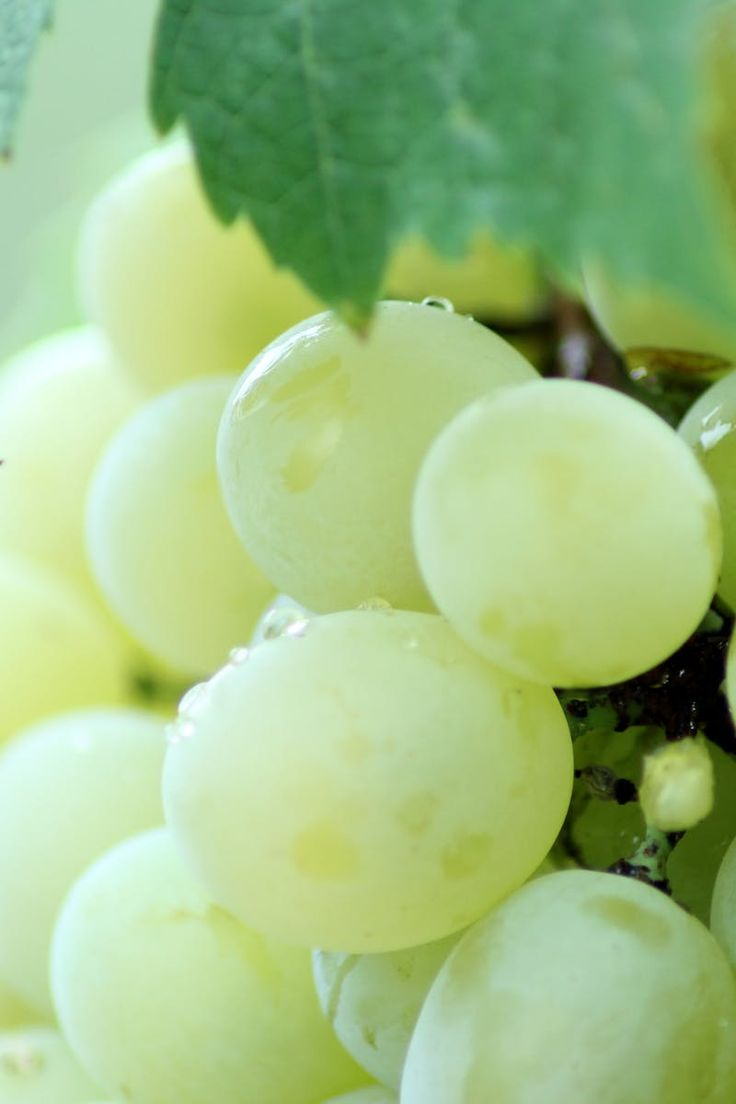 Free stock photo of food, healthy, leaf, grapes