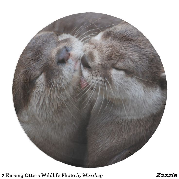 2 Kissing Otters Wildlife Photo
