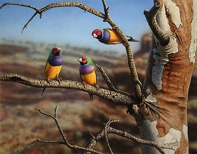 "GREG POSTLE (Australian realist artist)PAINTINGS...""social gathering gouldian finches."