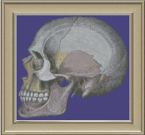 Lateral human skull cool anatomy by nerdylittlestitcher on Etsy, $3.00