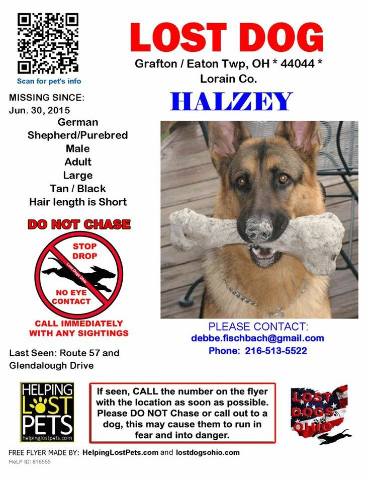 401 best OHIO - US LOST DOG REGISTRY images on Pinterest Pup - lost dog flyer examples