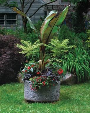 23 best rainwater collection images on pinterest - Best potting mix for container gardening ...