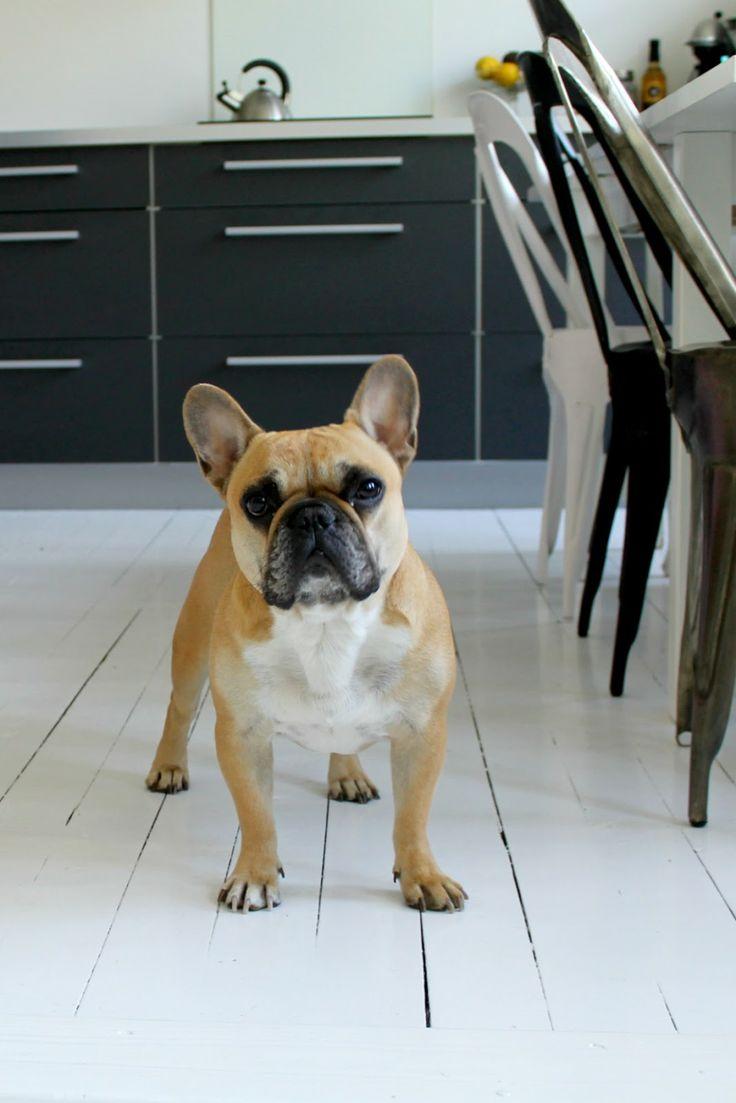HouseofBulldogs.blogspot.no
