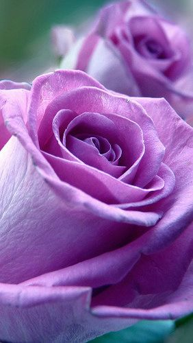 RP: Purple Adorations
