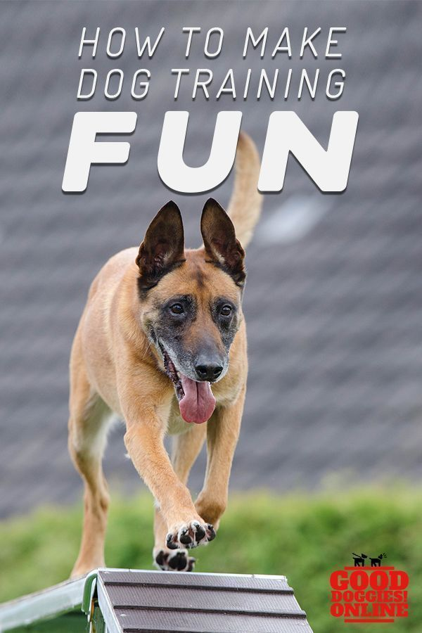 How To Make Dog Training Fun Dog Training Dog Training Tips