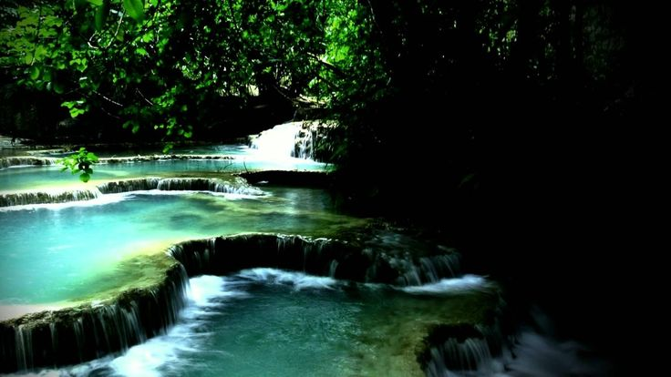 Rainforest Nature Ambient Sounds   FREE and Royalty Free