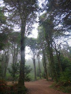 Sintra - take a walk on the wild side: Caminhada ao Alto do Monge e Cabeço da Raposa / Pe...