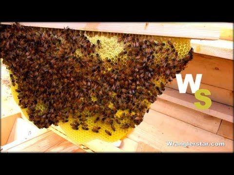 ▶ Beekeeping For Beginners Honeycomb - YouTube