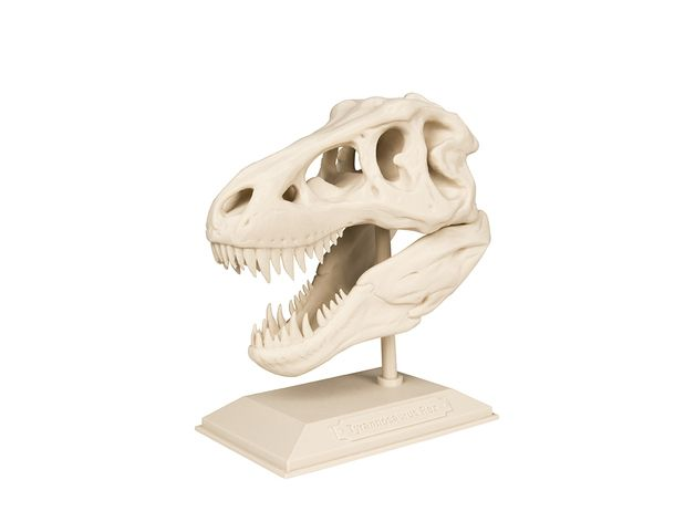 The T-Rex Skull from MakerBot Academy comes complete with a lesson plan that explores characteristics of the most-studied dinosaur, Tyrannosaurus Rex.   With this 3D printable model, students will understand what can be learned from fossils and in doing so, acknowledge the difference between scientific facts and theories.    To download and print the entire T-Rex Skeleton, visit: digitalstore.makerbot.com