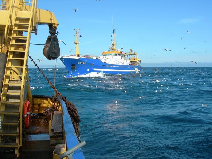 Noordzee |  Nederlandse haringvissers van de Pelagic Freezer-Trawler Association | Marine Stewardship Council | www.msc.org/nl |