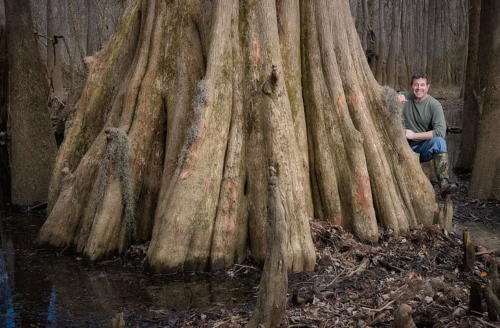 Big trees at Congaree National Park, South Carolina