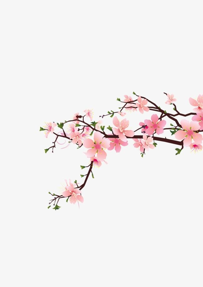 Peach Corner Decoration Peach Blossom Plum Flower Decoration Png Transparent Clipart Image And Psd File For Free Download Theme Dividers Instagram Instagram Spacers Blossoms Art
