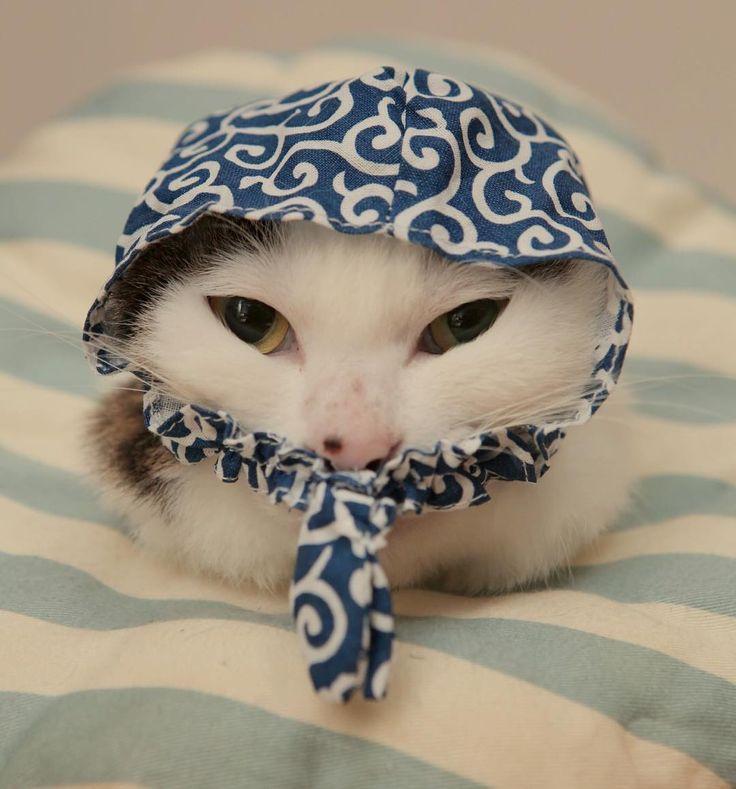 泥棒ネコ。 この人は突っ張り棒を外してからなら、戸を簡単に開けれる事を学習して『突っ張り棒を外してから戸を開ける』技を取得したカシコ! でも…その技をやると、お母はんにぜったい怒られるって事は学習できない…だから何回もその技をやって、何回もお母はんに怒られる…結果、やっぱり賢くないw #八おこめズラ #泥棒猫  #八おこめ #ねこ部 #cat #ねこ