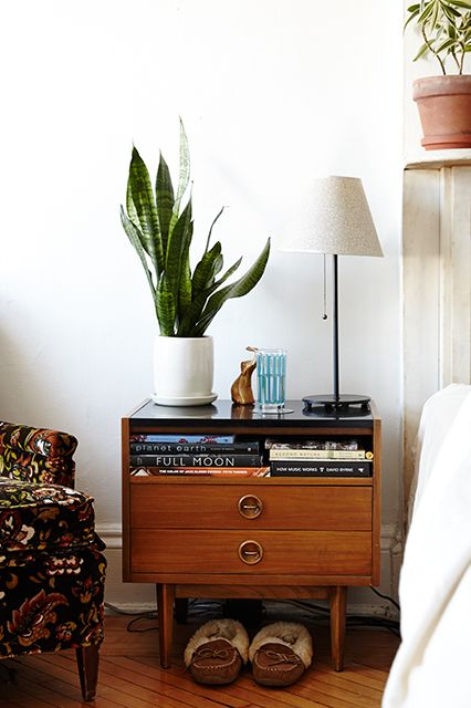 How to keep your house plants happy and healthy
