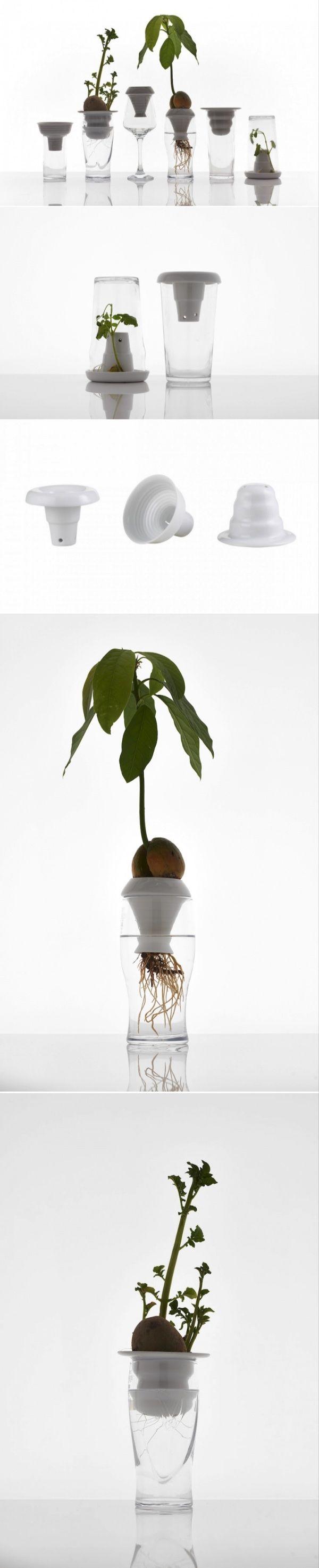 Root System: Ceramic Plant Funnels from Alicja Patanowska